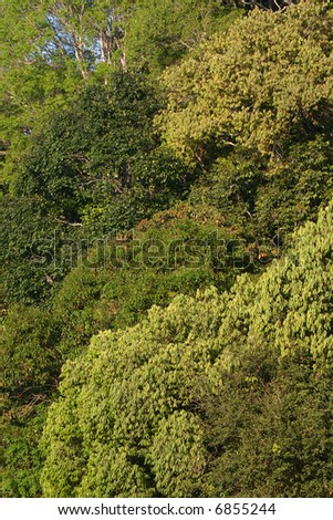 Canopy Layer of the Rainforest - Buzzle