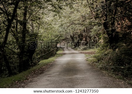 detail of road or forest road landscape surrounded by nature feeling of tranquility tranquility or peace #1243277350