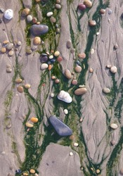Detail of sandy beach with colorful stones and green seaweed.