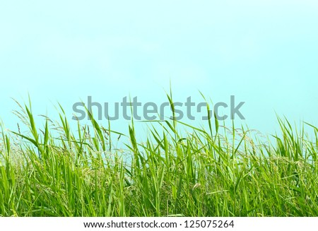 Detail of some flowering grass plants at the beach.