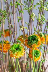 Detail of spring floristic bouquet with flowering yellow-green blossoms of Ranunculus asiaticus, Reinette Orange, (Persian Buttercup) and twigs of trees with exploding buds. Selective focus, close up