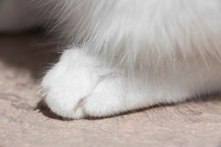 Detail of the hind leg of a white cat.