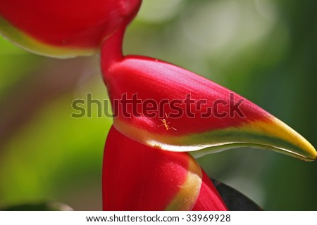 detail of tropical heliconia flower on green background