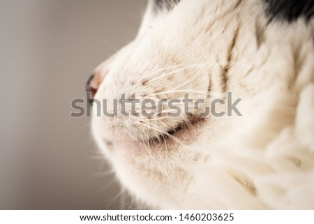 Detail of whiskers and mouth of white cat  #1460203625