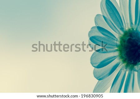 detail of white daisy on white background