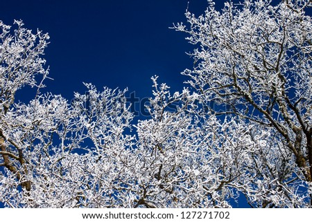 detail of winter tree over blue sky