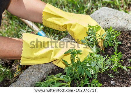 detail of woman hand gardening with yellow rubber gloves in sunny day