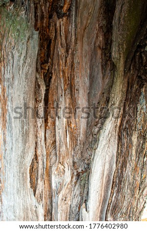 Detail on the bark of an old broken tree