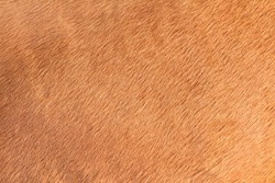 detail on the texture of brown horse hair
