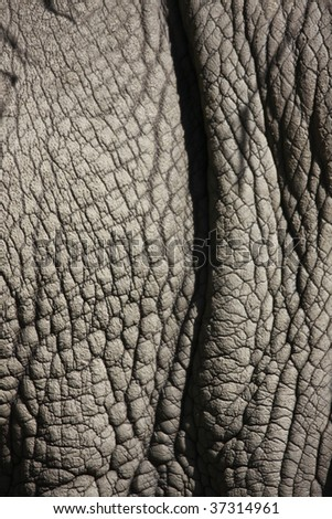 detail photo of a rhinos thick gray skin