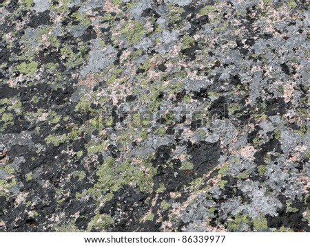 Detail, pink granite and grey, black and blue lichens on summit of Cadillac Mountain, Mount Desert Island, Acadia National park, Maine, New England