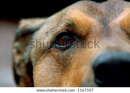 Detail shot of a dog's face.
