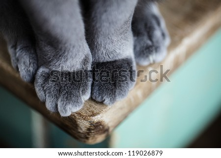 Detail shot of soft Cat paws while sitting on table