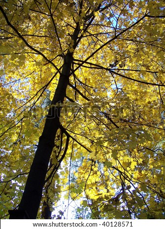 stock-photo-detail-view-of-autumn-leaves-on-tall-trunk-40128571.jpg