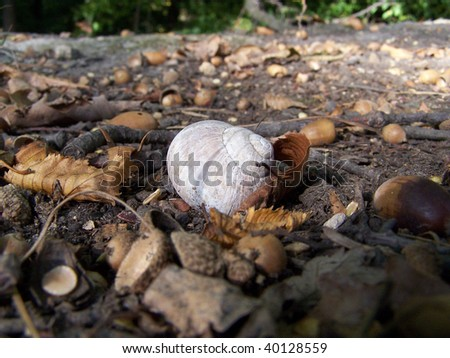 stock-photo-detail-view-of-snail-shell-on-autumn-ground-40128559.jpg