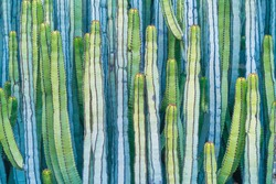 DETAIL VIEW OF THE CARDON CACTUS IN SUMMER WITH RICH BLUE GREEN AND TORQOUISE COLORS