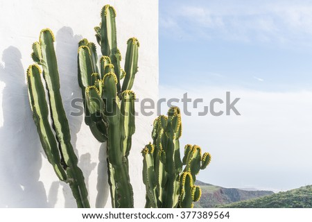 DETAIL VIEW OF THE CARDON CACTUS IN SUMMER WITH RICH BLUE GREEN AND TURQUOISE COLORS AND SKY IN THE BACKGROUND AND WHITE RENDERED PLASTER WALL #377389564