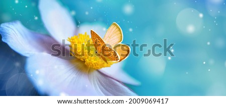 Detail with shallow focus of white anemone flower with yellow stamens and butterfly in nature macro on background of blue sky with beautiful bokeh. Delicate artistic image of beauty of nature.
