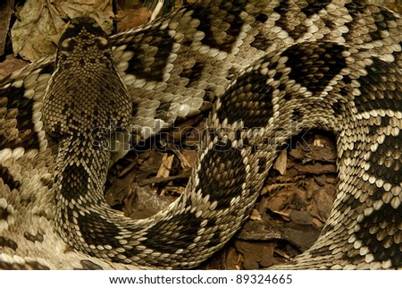 Detailed background of a large python snake sleeping
