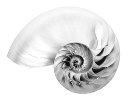 Detailed black and white photo of a halved shell of a chambered nautilus (Nautilus pompilius) shows beautiful spiral pattern. Isolated on white