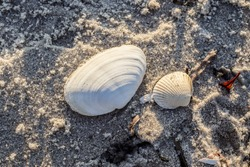 Detailed close up view at shells on a sandy beach at the baltic sea
