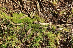 Detailed close up view on a forest grounds showing leaves branches and moss