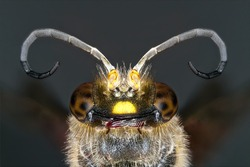 Detailed macro photography of insect wasp.
