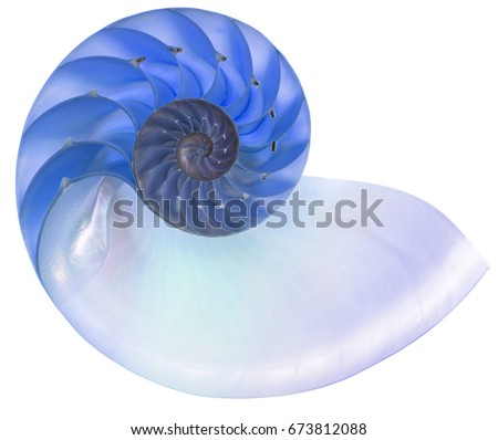 Detailed photo of a blue halved backlit  shell of a chambered nautilus (Nautilus pompilius) isolated on white