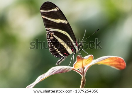 detailed pic of a beautiful butterfly on a flower in a forest showing black, yellow and white wings.