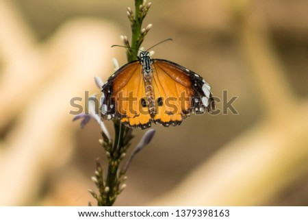 detailed pic of a beautiful butterfly on a tree in a forest showing black, orange and white wings.