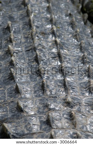 detailed picture of the back of an american alligator