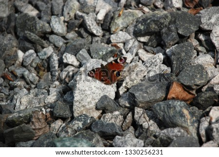 Detailed picture of the Brown butterfly on the stones