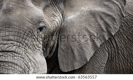 Detailed portrait of and old Elephant