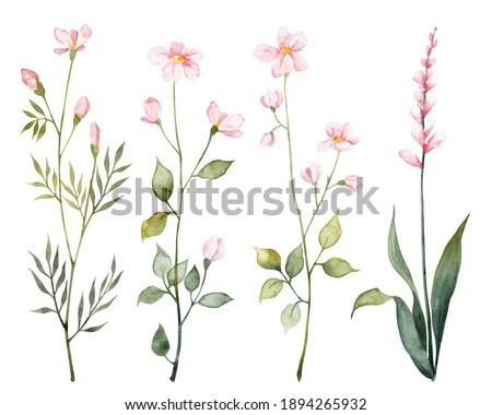 Detailed realistic botanical clip art. Watercolor cute flowers. Different pink blossom with green leaves. Objects isolated on white background. Botanical illustration.