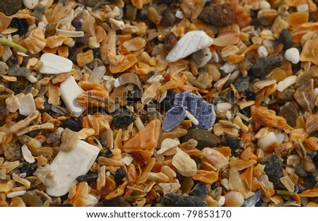 Detailed Shell Particles. A macro of shell particles at the Sand Beach in Acadia National Park, Maine, United States.