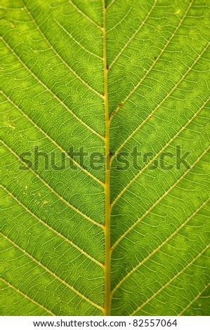 Detailed texture of a fresh green leaf