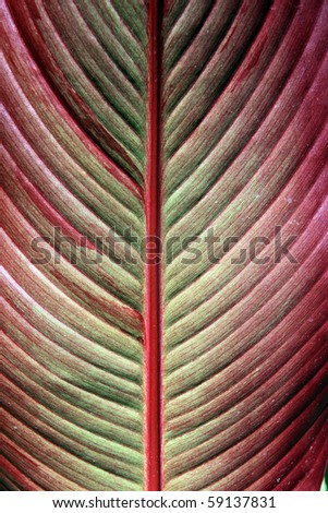 detailed texture of the red sheet tree