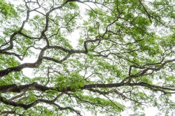 Detailed tree branches