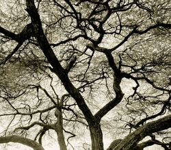 Detailed tree branches in Lake Manyara National Park - Tanzania, East Africa (stylized retro)