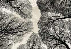 Detailed trees branches on sky - Russia (stylized retro)