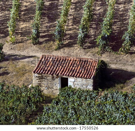 Detailed view of the world famous vineyards of Porto wine with a small shack used to collect tools during harvest season.