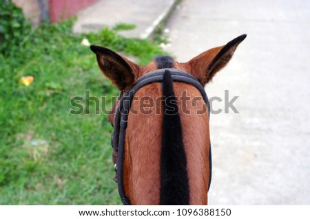 Details of a horse's head #1096388150