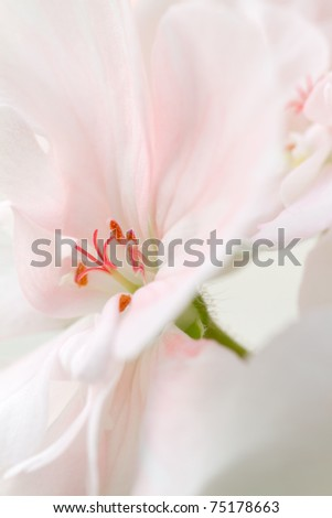 Details of a pink flower in bloom