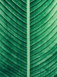 Details of big green leaf, Abstract striped texture from natural background, vintage tone