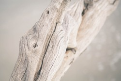 Details of driftwood on the beach.