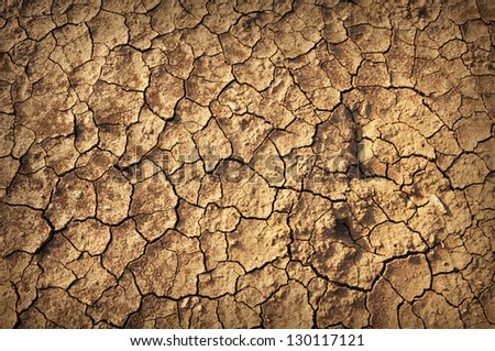 details of Dry cracked soil