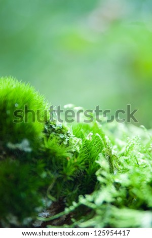Details of moss plants in the forest. - stock photo