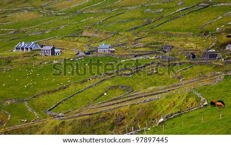 Details of the always green irish landscape at Dingle Peninsula, County Kerry, Ireland.