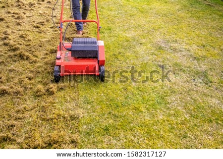 Dethatching the Lawn with an Electric Dethatcher Photo stock ©