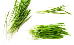 Detox Food Superfood Green Organic Barley Sprout grass isolated on white background.